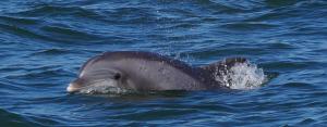 Nos premier dauphins